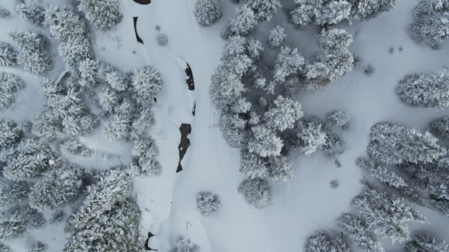 Birds Eye View of Snow Covered Trees