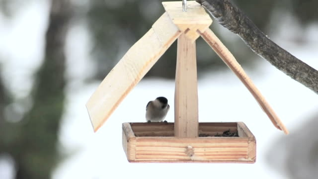Birds feeding in a small wooden house video