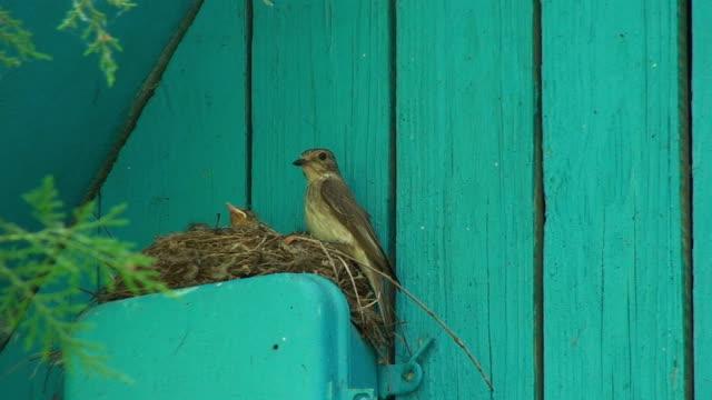 Birds feeding their nestling video