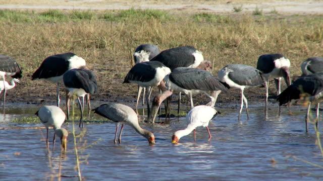 Birds Fishing