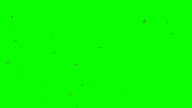 鳥のフライト群れの速度緑の画面ループ - 鳥点の映像素材/bロール