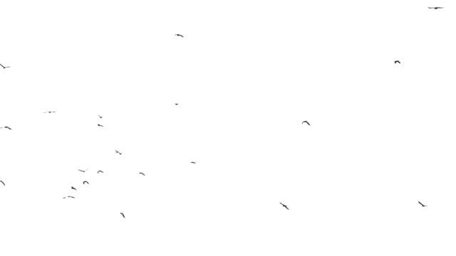 Birds flock background video
