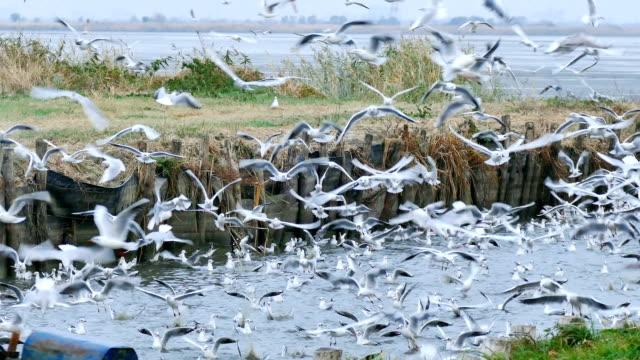 鳥 - カモメの群れ - 水鳥点の映像素材/bロール