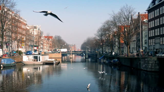 Birds Flocking Around Scenic Canal video