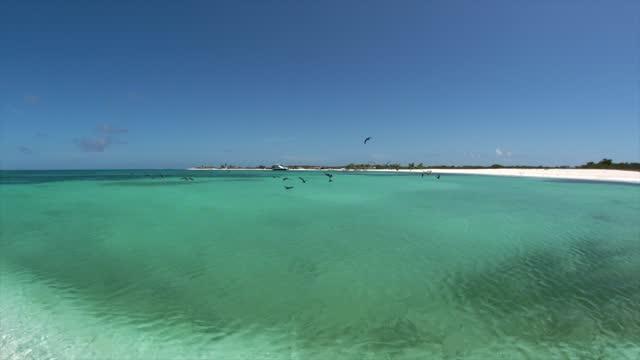 Birds fly in beautiful beach