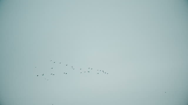 Birds fly in symmetric V-formation in blue sky video