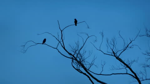 Birds Fly Off Branches Couple of birds on the tree top flying away limb body part stock videos & royalty-free footage