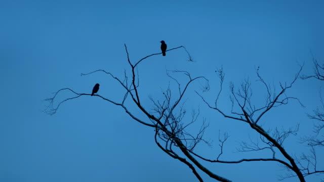 birds fly off branches - fronda video stock e b–roll