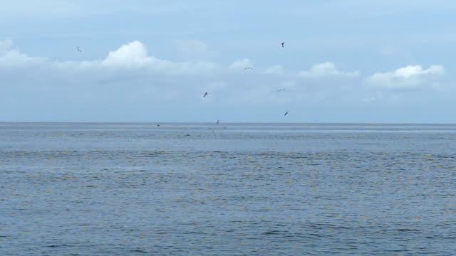 SLO MO/Birds fly over the sea video
