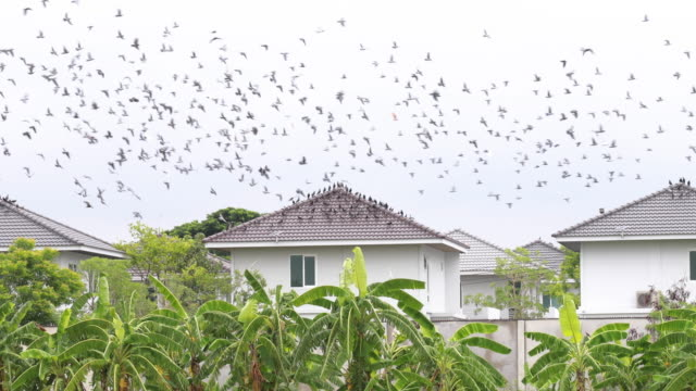 birds flying and resting on a Tile Roof