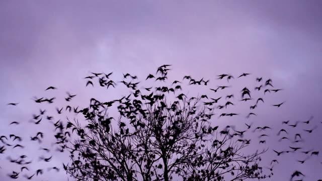 vídeos y material grabado en eventos de stock de pájaros volando lejos - pájaro