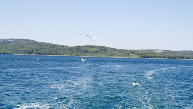WS Birds flying behinds a motor boat video