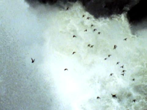 birds flying by Iguacu Waterfall NTSC video