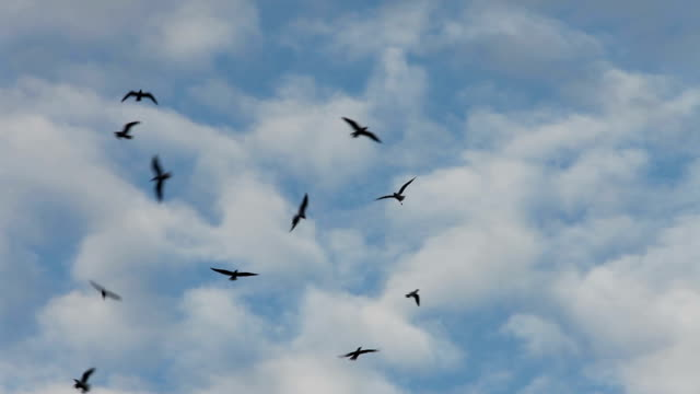 birds  flying high in the blue sky video
