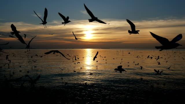 Birds flying in morning video