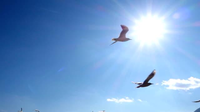 空飛ぶ鳥の - チョウ点の映像素材/bロール