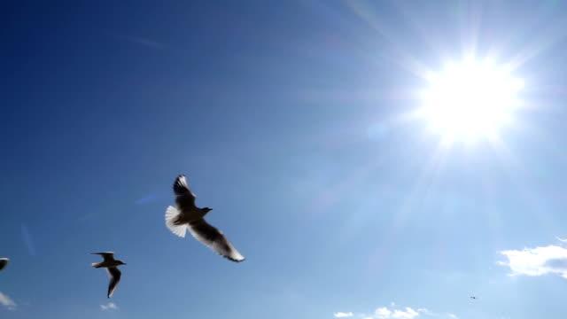 空飛ぶ鳥の ビデオ
