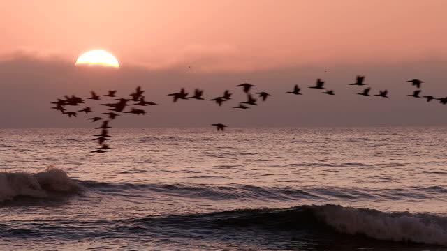 stockvideo's en b-roll-footage met vogels vliegen in slow motion bij zonsondergang boven de zee - twilight