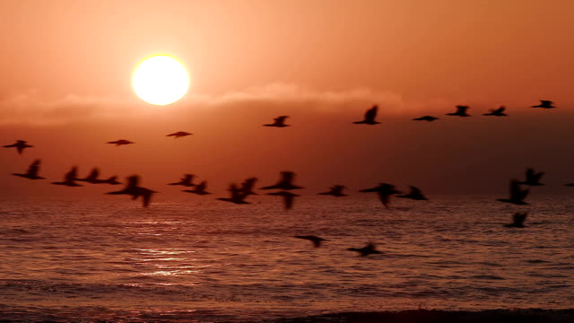 Birds flying in slow motion at sunset over the sea video