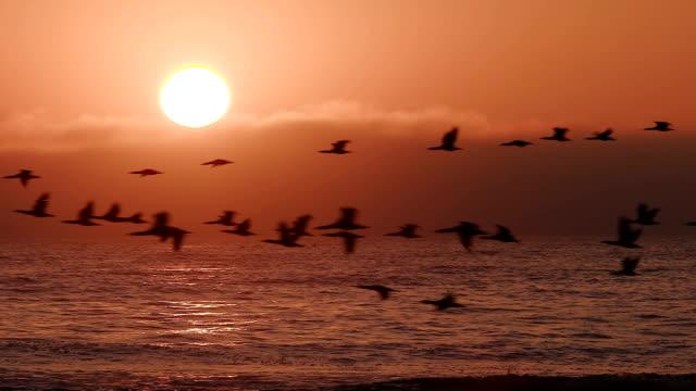 fåglar flyger i slow motion vid solnedgången över havet - djurkroppsdel bildbanksvideor och videomaterial från bakom kulisserna