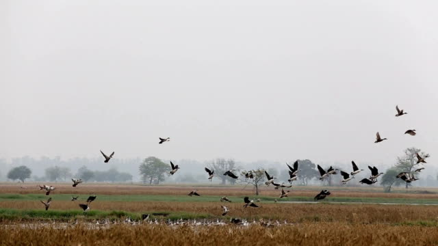 Birds Flying in the Nature video