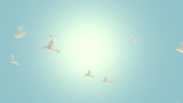 새 플라잉 루프 알파 매트 hd, sd - 하늘을 나는 새 스톡 비디오 및 b-롤 화면