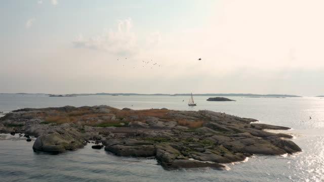fåglar som flyger över en liten ö - summer sweden bildbanksvideor och videomaterial från bakom kulisserna