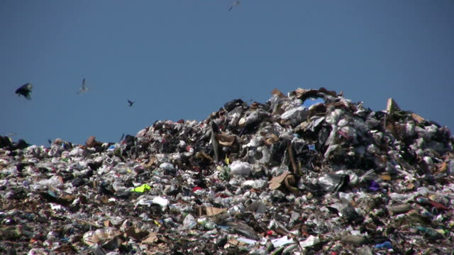 Birds Flying Over Fresh Pile of Garbage at the Landfill  less than 10 seconds stock videos & royalty-free footage