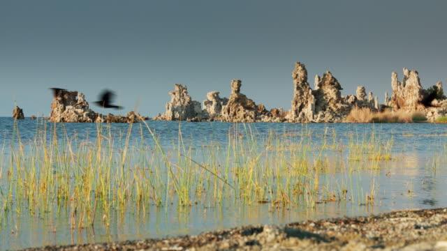 Birds Flying Over Mono Lake with Background Tufa video