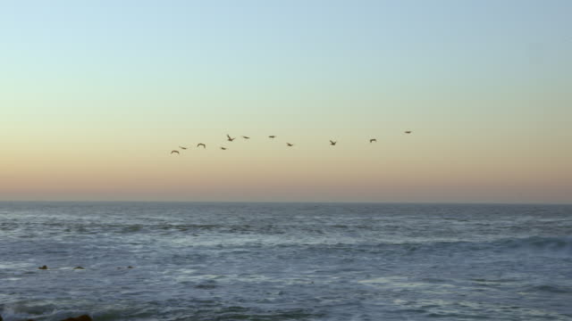 Birds flying over Monterey Bay