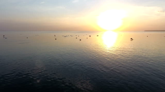 Birds flying over the sea surface at a splendid sunset in slow motion video