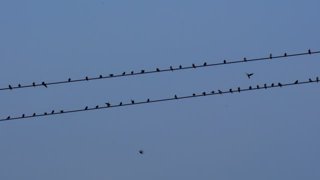 birds flying to the wire - cavo d'acciaio video stock e b–roll