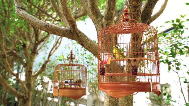 Birds for Sale, Bird Garden in Mong Kok, Kowloon, Hong Kong video