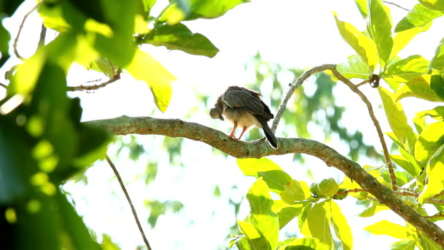birds holding on tree branch - appollaiarsi video stock e b–roll