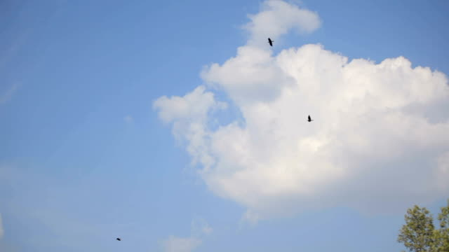 Birds hover in the blue sky against the rocks video