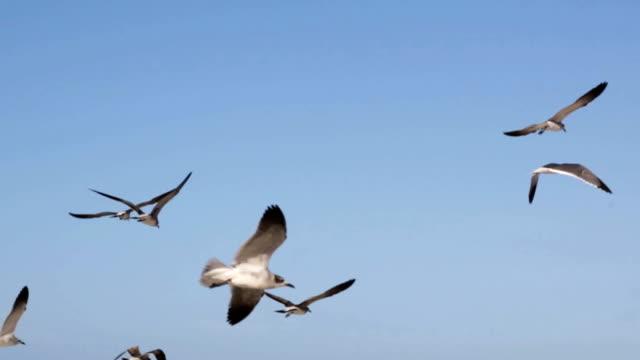舞う鳥のグループウェイティングを供給 ビデオ