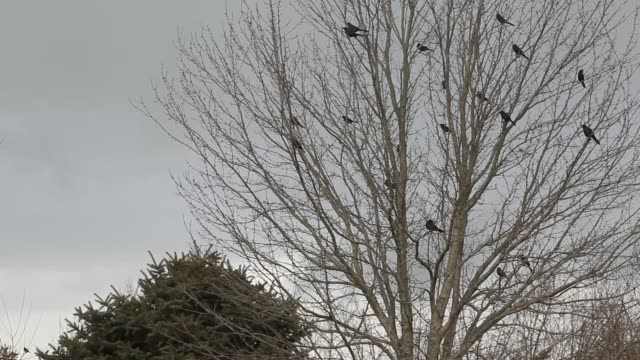 birds in bare tree during storm