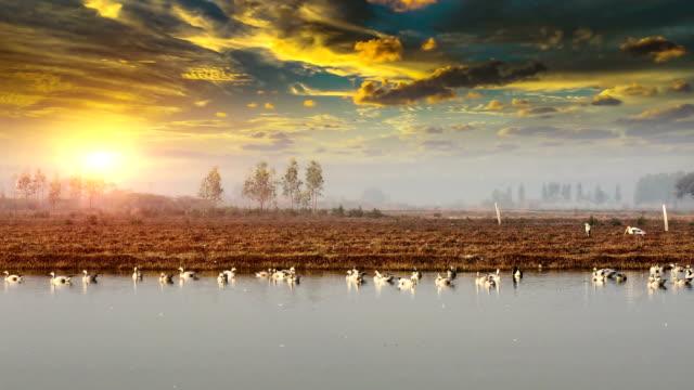 fåglar i sjön under den vackra molnlandskap - haryana bildbanksvideor och videomaterial från bakom kulisserna