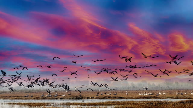 Birds in lake under the beautiful cloudscape
