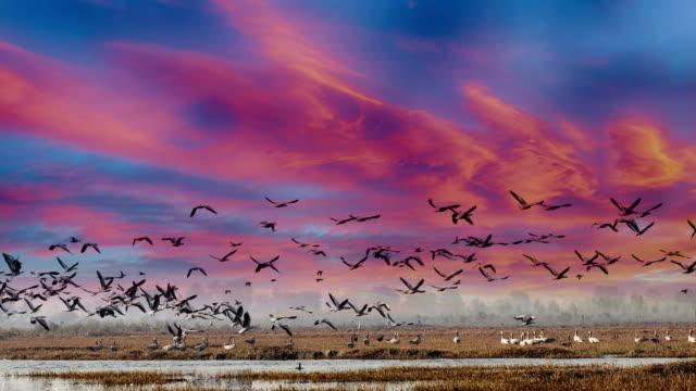 birds in lake under the beautiful cloudscape - battere le ali video stock e b–roll
