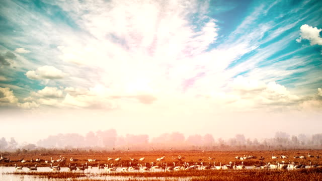 birds in lake under the beautiful cloudscape - харьяна стоковые видео и кадры b-roll