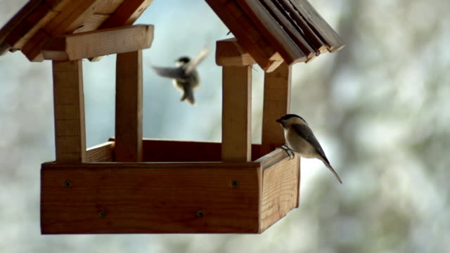Birds in SLOW MOTION video