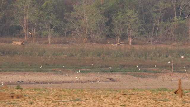 Birds in the dried reservoir video