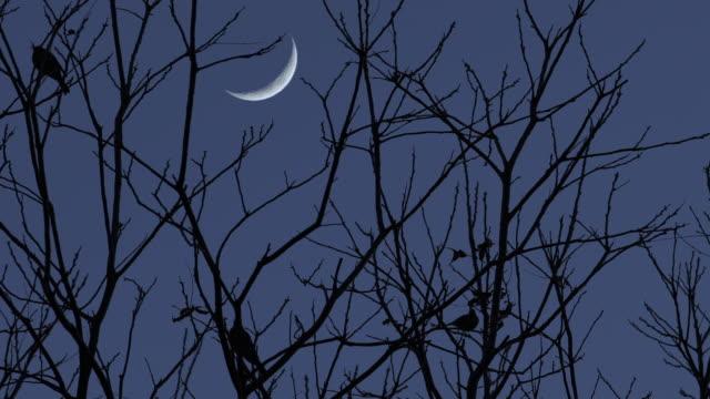 birds in tree silhouette against night sky crescent moon - полумесяц форма предмета стоковые видео и кадры b-roll