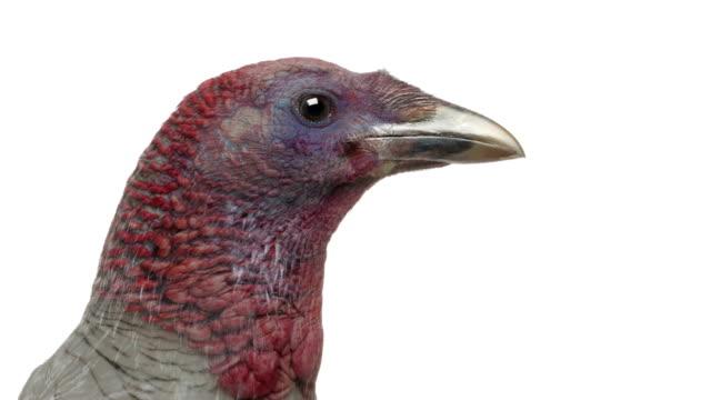 Birds morphing video