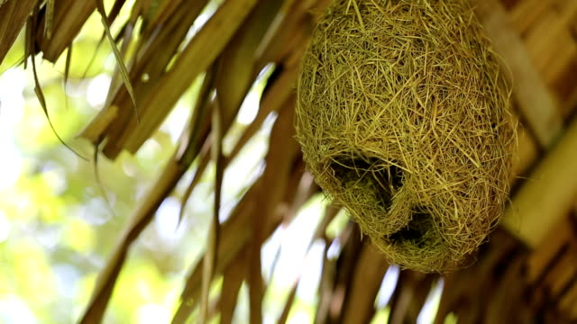 Bird's nest hanging under the roof. video
