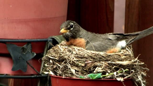bird's nest - nest stock-videos und b-roll-filmmaterial