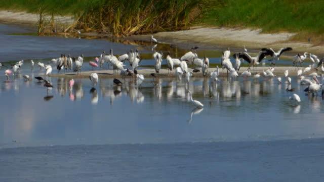 鳥、「サンドバー」 - バードウォッチング点の映像素材/bロール