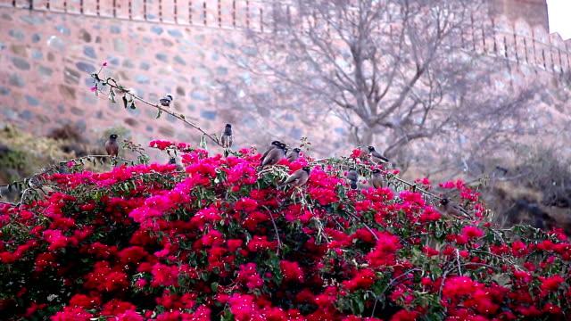 birds on a tree. mumbai. india - park narodowy kanha filmów i materiałów b-roll