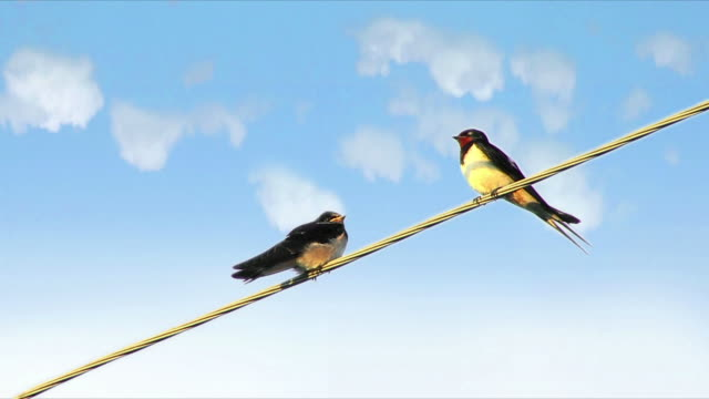 Birds on a Wire video